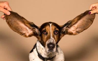 Wir stellen ein: Auszubildende/r (m/w/d) der Hörakustik